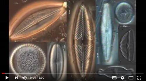 une vidéo expliquant comment effectuer des prélèvements diatomées pour faire du métabarcoding