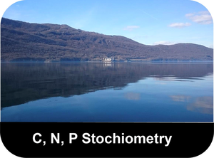 CNP-Stochiometry-button