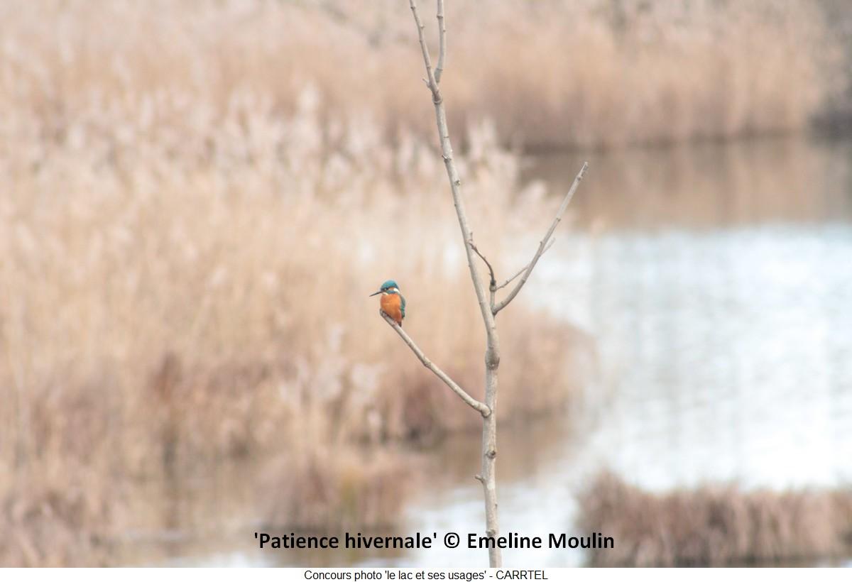 'Patience hivernale' © Emeline Moulin