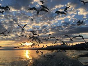 'impression au soleil levant'-un joli concours de circonstances favorables pour cette photo © Raphaël Jordan
