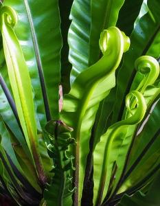 Enquête sur l'immunité des plantes