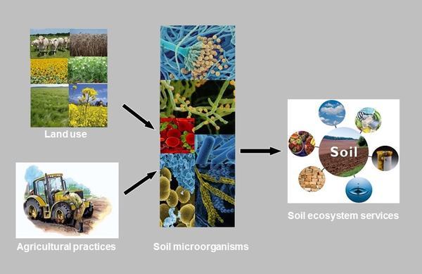 visuel BIOmE Site web agroécologie version en gris