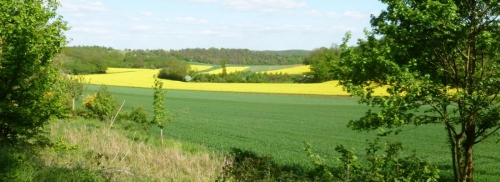 Pesticides et structure du paysage : Impact sur la prédation des bioagresseurs dans les cultures