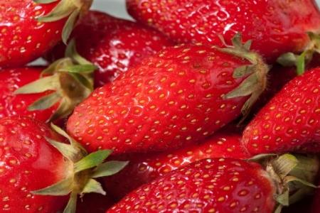 Champignons et bactéries en symbiose avec les fraises