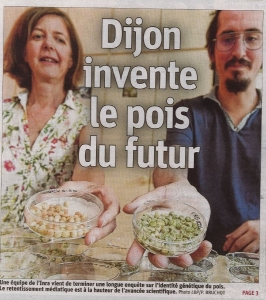 Dijon invente le pois du futur